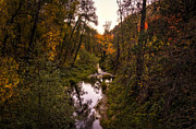 Oak Creek Prints - Autumn Creek  Print by Saija  Lehtonen