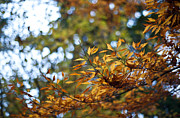 Fall Leaves Prints - Autumn Crescendo Print by Mike Reid