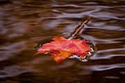 Autumn Leaf On Water Metal Prints - Autumn Metal Print by Darren Strubhar