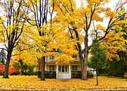 Yellow Trees Photos - Autumn Day by Julie Palencia