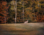 Autumn Landscape Art - Autumn Deer by Jai Johnson