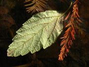 Autumn Leaf Photos - Autumn Departure by Juergen Roth