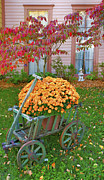 Indiana Flowers Prints - Autumn Display I Print by Steven Ainsworth