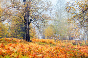 Balkan Mountains Photos - Autumn Dreams by Evgeni Dinev