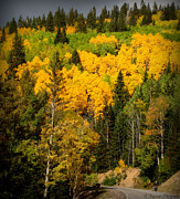 Santa Fe National Forest Photos - Autumn Drive by Aaron Burrows