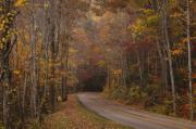 Smoky Mountains Posters - Autumn Drive Poster by Andrew Soundarajan