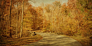 Fall Scenery Prints - Autumn Drive Print by Sandy Keeton