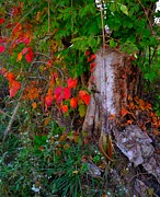 Southern Indiana Art - Autumn Exposed by Julie Dant