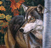 Wolf Pastels Framed Prints - Autumn Eyes Framed Print by Deb LaFogg-Docherty
