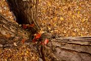 Fall Photos Prints - Autumn Fall Print by James Bo Insogna