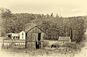 Shed Framed Prints - Autumn Farm sepia Framed Print by Steve Harrington