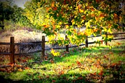 Light And Shadows Prints - Autumn Fence Print by Carol Groenen