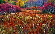 Autumn Foliage Photos - Autumn Field by June Marie Sobrito