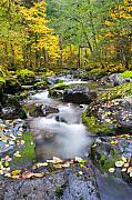 Stream Framed Prints - Autumn Flow Framed Print by Mike  Dawson