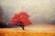 Autumn Fog Print by Darren Fisher