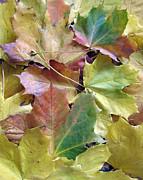 Autumn Foliage Print by Ausra Paulauskaite