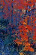 Autumn Foliage Print by Don Hammond