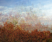 Tom Biegalski Prints - Autumn foliage impression Print by Tom Biegalski