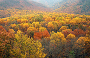 Gatlinburg Tennessee Prints - Autumn Foliage In Smoky Mountains Print by Kathy Van Torne