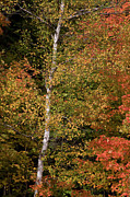 Autumn Foliage Photos - Autumn Foliage by John Burnett