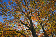 Connecticut Prints - Autumn Foliage Print by John Greim