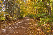 Matt Dobson Posters - Autumn Foliage On A Country Road Poster by Matt Dobson