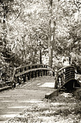 Plants Framed Prints Photos - Autumn Footbridge Monochrome by M K  Miller