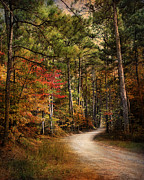Autumn Landscape Metal Prints - Autumn Forest 2 Metal Print by Jai Johnson