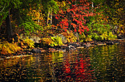 Autumn Posters - Autumn forest and river landscape Poster by Elena Elisseeva