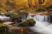 Mountain Stream Art - Autumn Forest by Evgeni Dinev