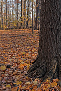 Forest Floor Photos - Autumn forest. by Fernando Barozza