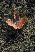 Keywords Prints - Autumn Frost On The Ground At The Mount Print by Richard Nowitz