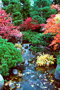 Japanese Fall Foliage Framed Prints - Autumn Garden Waterfall I Framed Print by Nancy Mueller