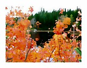 Sketchbook Photo Prints - Autumn Glory Print by Daryl Macintyre