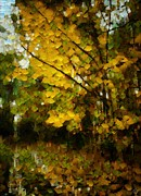 Trees With Leaves Framed Prints - Autumn Gold Framed Print by Gun Legler