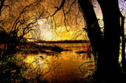Neagh Prints - Autumn Gold Print by Kim Shatwell-Irishphotographer
