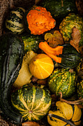 Matt Dobson Posters - Autumn Gourds Collage Poster by Matt Dobson