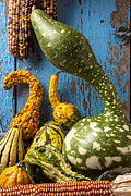 Yellows Prints - Autumn gourds Print by Garry Gay