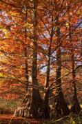 Autumn Grandeur Print by Tamyra Ayles