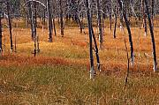 Yellowstone Park Prints - Autumn Grasses in Yellowstone Print by Bruce Gourley