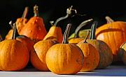 Orange Pumpkins Prints - Autumn Harvest Gourds Print by Tony Ramos