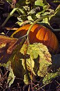 Pumpkin Patch Prints - Autumn Harvest Print by Joann Vitali