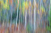 Abstract Impressionism Photo Prints - Autumn Impression Print by Bill Morgenstern