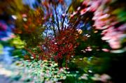 Kaleidoscope Photos - Autumn Impressions 2 by Wenata Babkowski