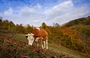 Colorfull Photos - Autumn in Apuseni Mountains by Mircea Costina Photography
