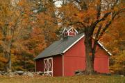 Red Barn. New England Prints - Autumn in Aspetuck Print by Laura DAddona