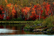 Fall Colors Autumn Colors Photo Posters - Autumn in Canada 2 Poster by Marjorie Imbeau