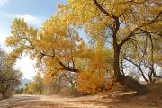 Greg Taylor - Autumn in CDO Wash