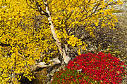 Yellow Leaves Prints - Autumn in Finland Print by Heiko Koehrer-Wagner