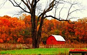 Indiana Autumn Prints - Autumn In Indiana Print by Robin Pross